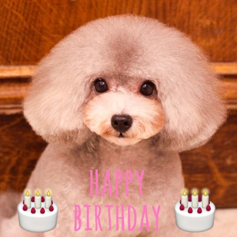 ☆ Happy Birthday ・ エルフィちゃん ☆_d0060413_10284282.jpg