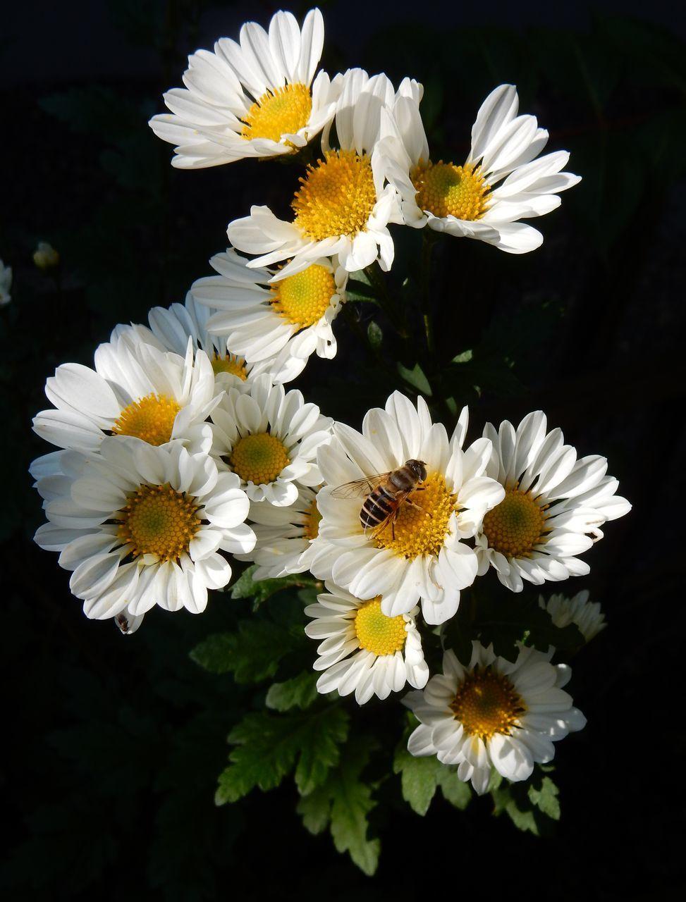 菊の秋_c0025115_22460645.jpg