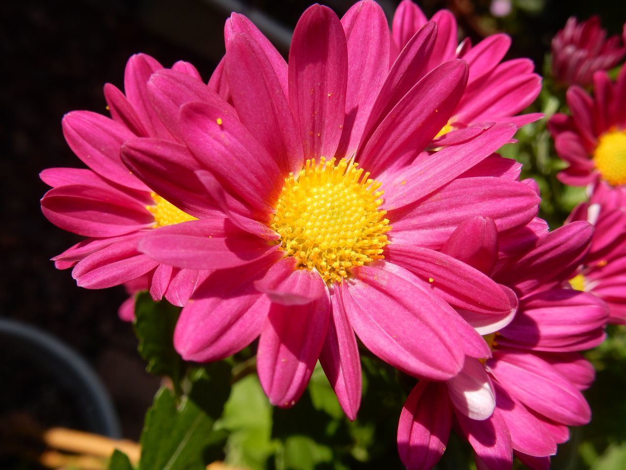 菊の秋_c0025115_22462950.jpg