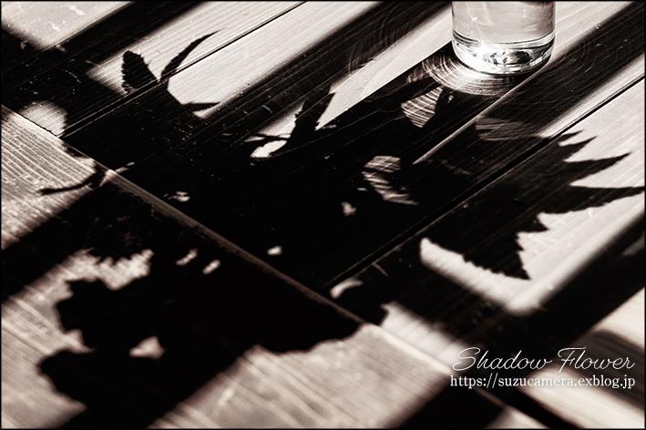 Shadow Flower_f0100215_21003714.jpg