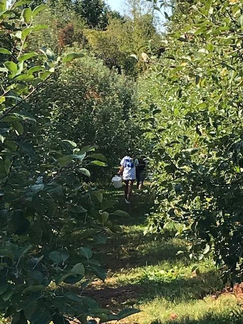 早くもりんご狩りへ_d0269832_19424001.jpeg