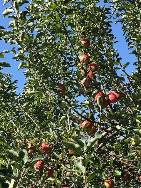 早くもりんご狩りへ_d0269832_19440745.jpeg