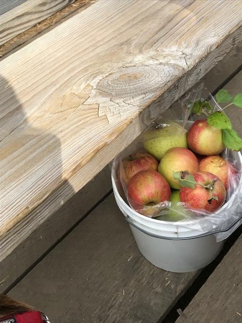 早くもりんご狩りへ_d0269832_19501653.jpeg