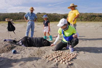 国際ビーチクリーンと赤羽根地区ウミガメ孵化調査・2_c0019338_10115281.jpg