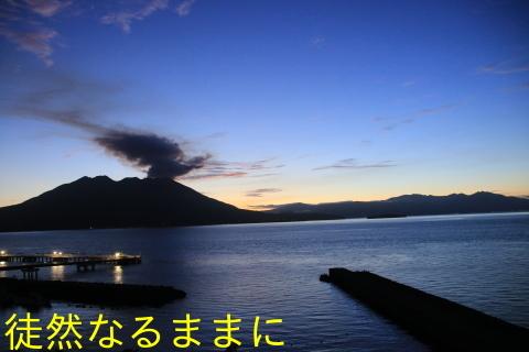 クロマダラソテツシジミ  in  鹿児島_d0285540_05370226.jpg