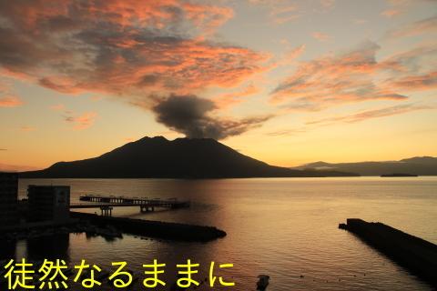 クロマダラソテツシジミ  in  鹿児島_d0285540_05372569.jpg
