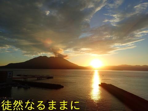 クロマダラソテツシジミ  in  鹿児島_d0285540_05372985.jpg