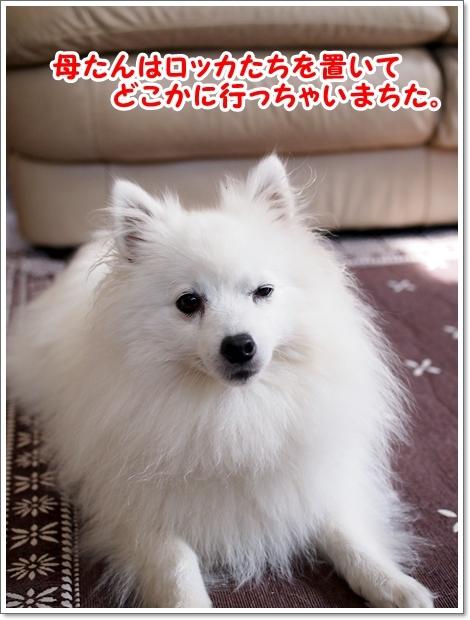 ぽむカフェ!_d0013149_23552465.jpg