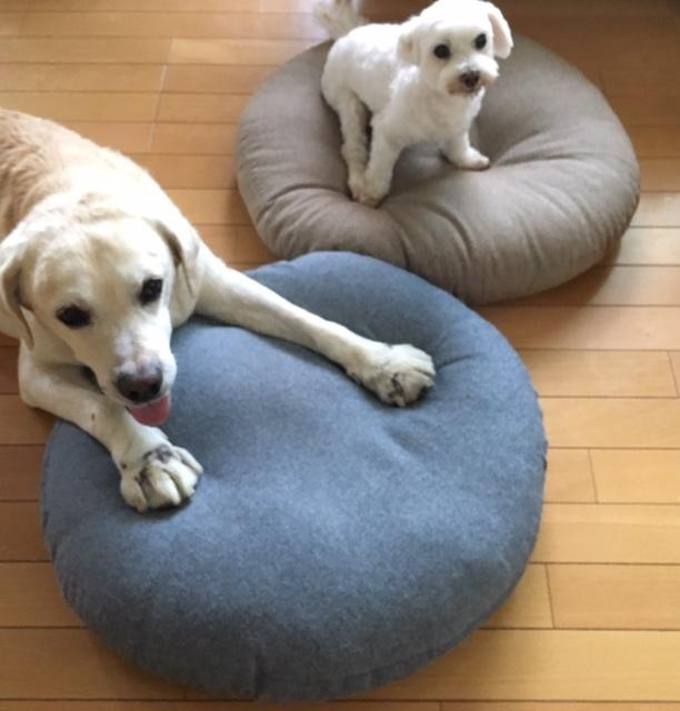 Floor cushion×2  モモとサージュ_a0165160_17131914.jpg