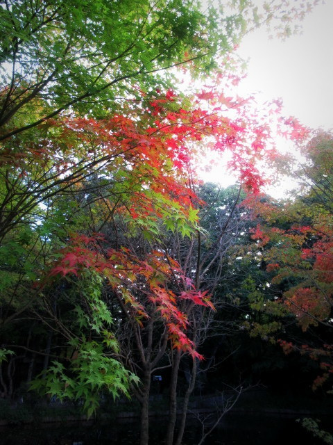 2019・軽井沢紅葉速報① * 少しずつ色づき始めた雲場池♪_f0236260_19502700.jpg