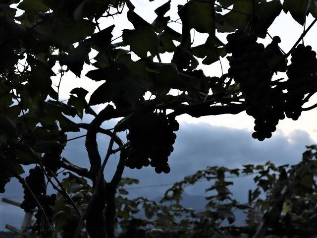 藤田八束の鉄道写真@秋深まる素敵な五能線、ローカル列車から若者たちの声が聞こえてくる_d0181492_22504696.jpg