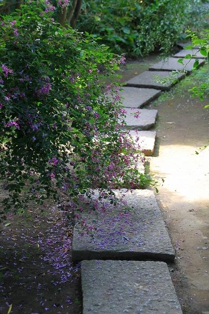 鎌倉の秋の花 宝戒寺の萩_f0374092_17100324.jpg