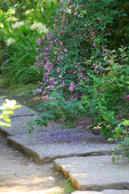 鎌倉の秋の花 宝戒寺の萩_f0374092_17104990.jpg