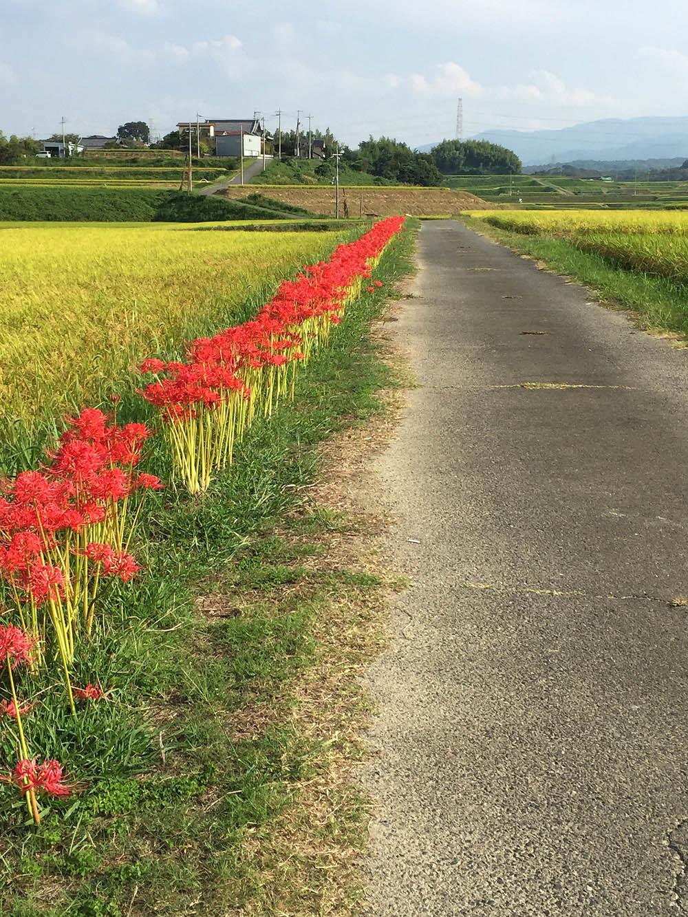田圃のノビタキ_e0362696_16454931.jpg