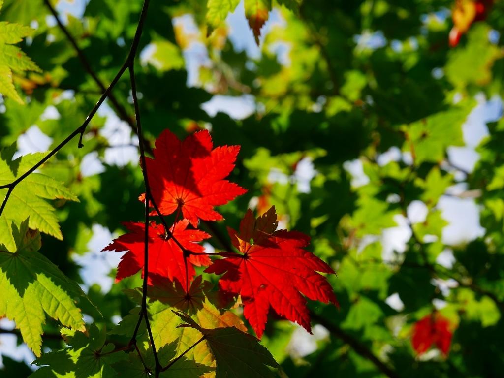 秋を探しにイチャンコッペ山、2019.9.30_f0138096_22044655.jpg