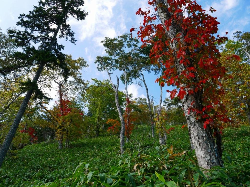 秋を探しにイチャンコッペ山、2019.9.30_f0138096_22045182.jpg