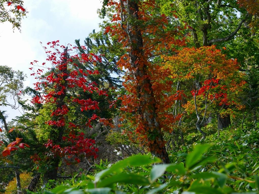 秋を探しにイチャンコッペ山、2019.9.30_f0138096_22045810.jpg