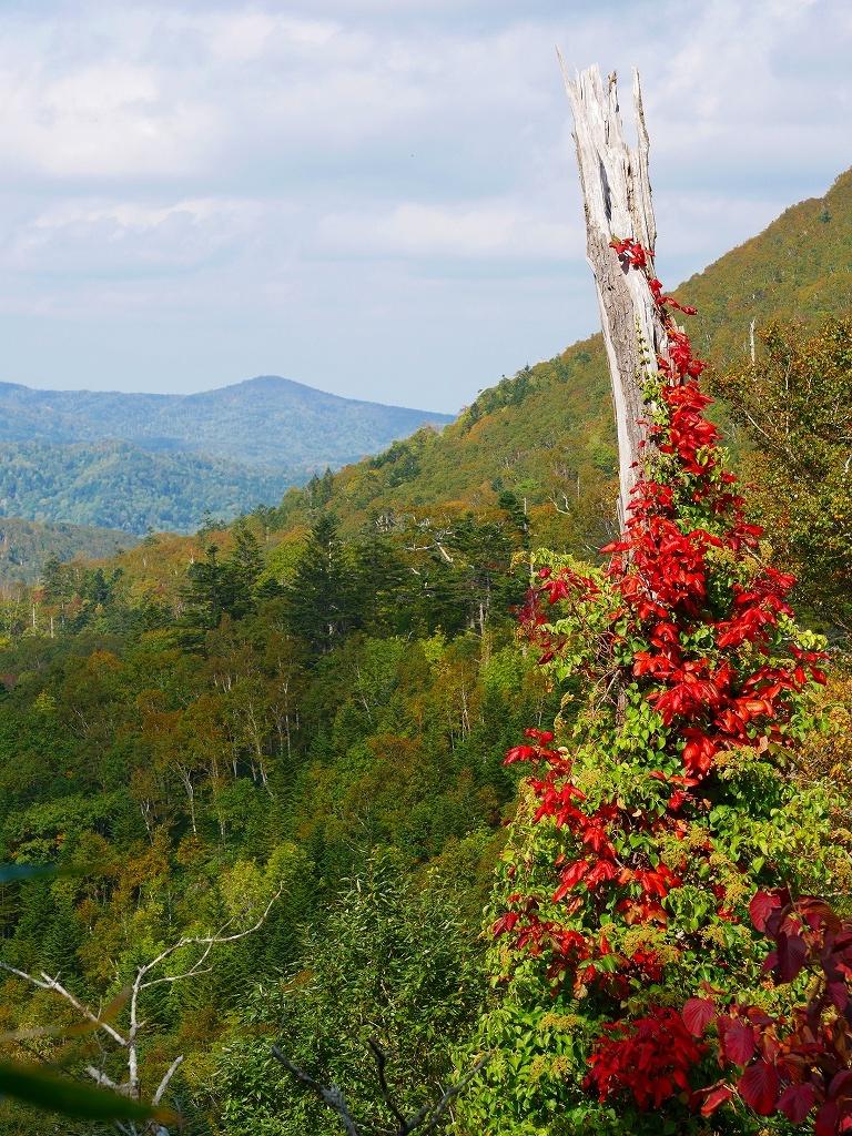 秋を探しにイチャンコッペ山、2019.9.30_f0138096_22055191.jpg