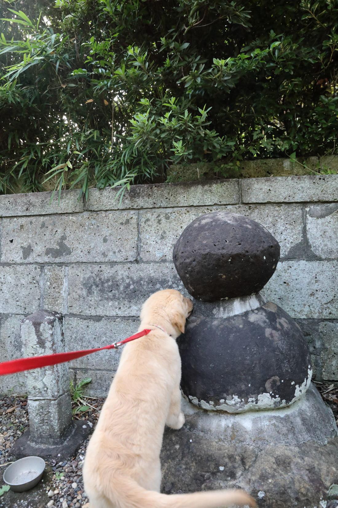 神社までお散歩♪_b0275998_08594051.jpg