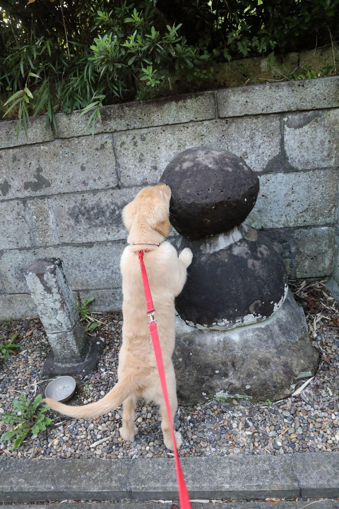 神社までお散歩♪_b0275998_08594251.jpg