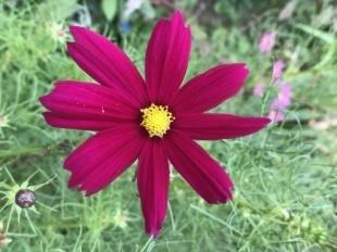 お花が綺麗に咲き 涼を貰う_a0346704_18153551.jpg