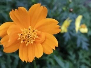 お花が綺麗に咲き 涼を貰う_a0346704_18154292.jpg