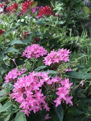 お花が綺麗に咲き 涼を貰う_a0346704_18155937.jpg