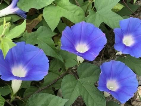 お花が綺麗に咲き 涼を貰う_a0346704_18162062.jpg