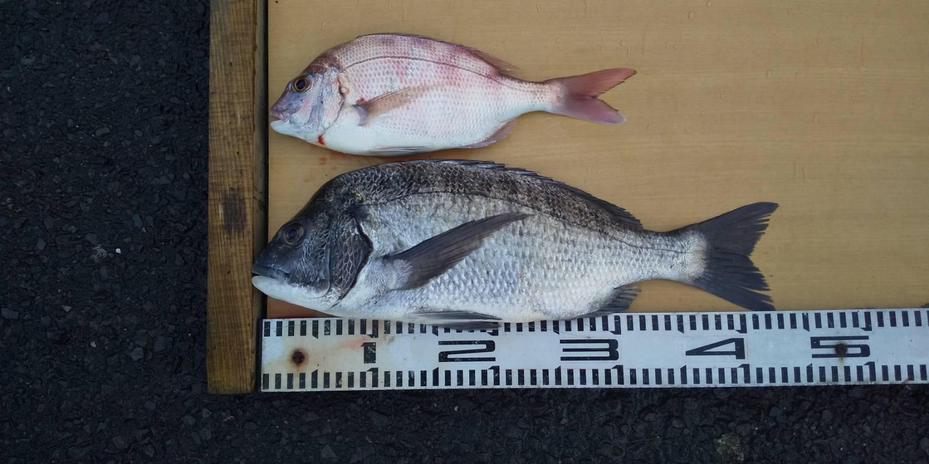 秋は釣りで忙しい_e0150006_17063059.jpg