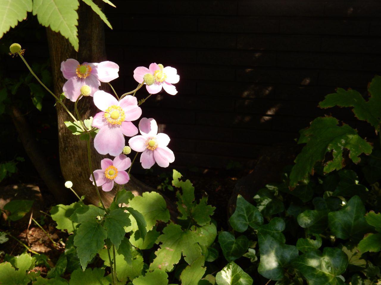 秋の庭_c0025115_21314386.jpg