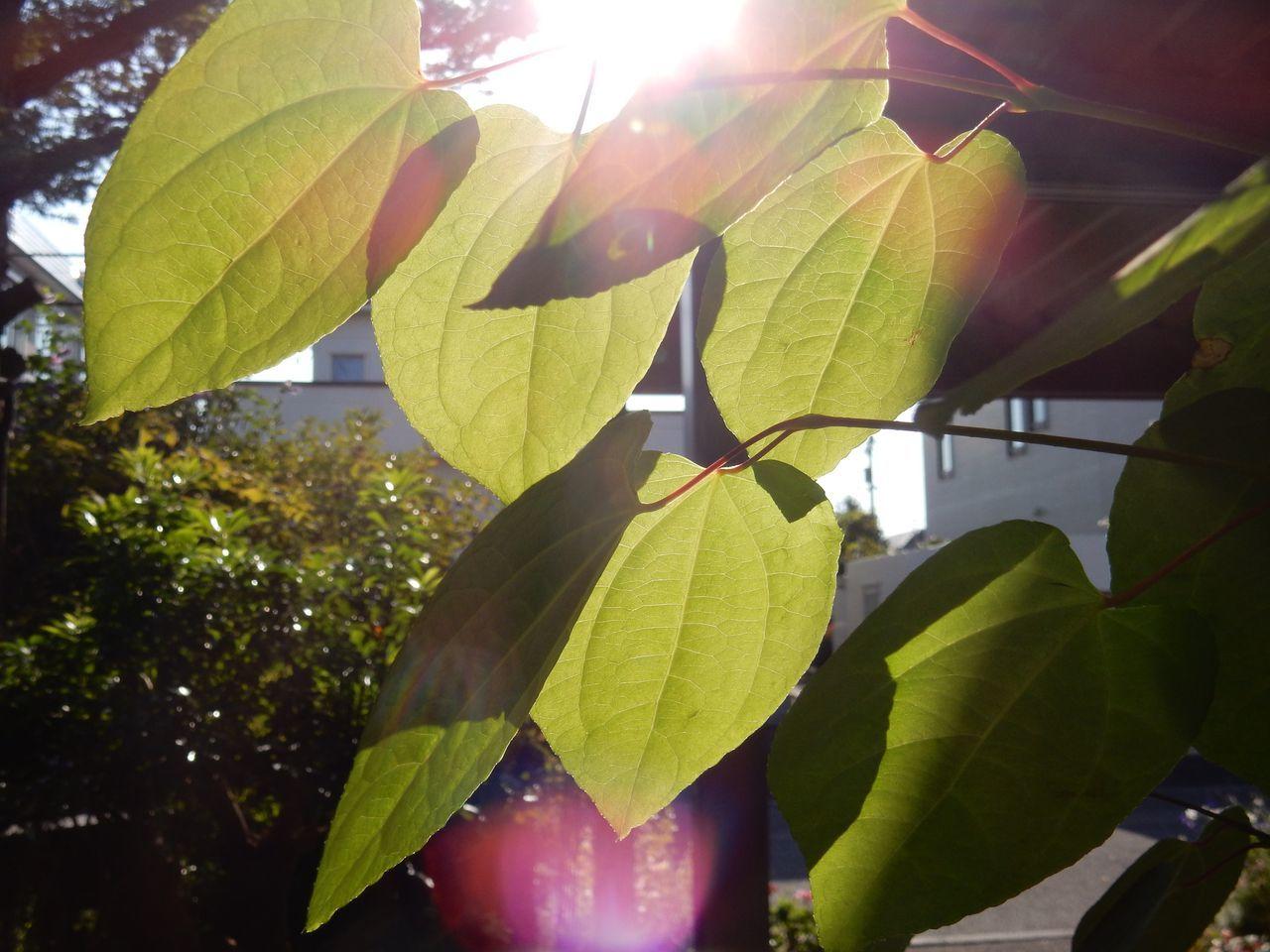 秋の庭_c0025115_21360023.jpg