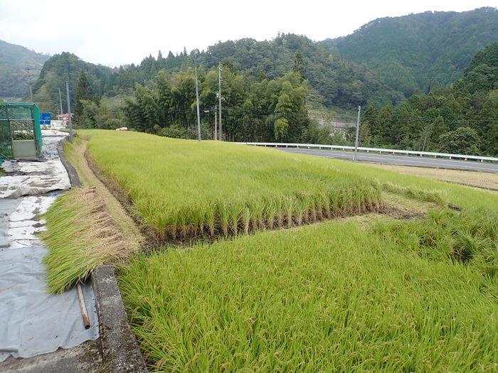 今日も稲刈り_c0116915_00374879.jpg