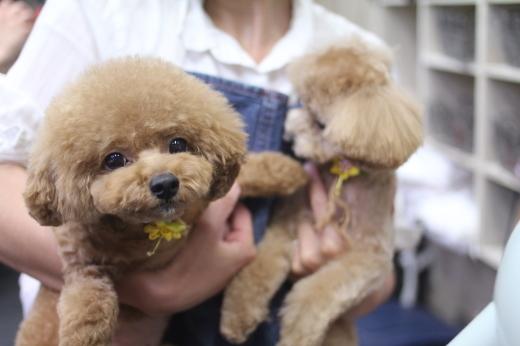 9月28日ご来店のワンちゃんです!!_b0130018_09280164.jpg