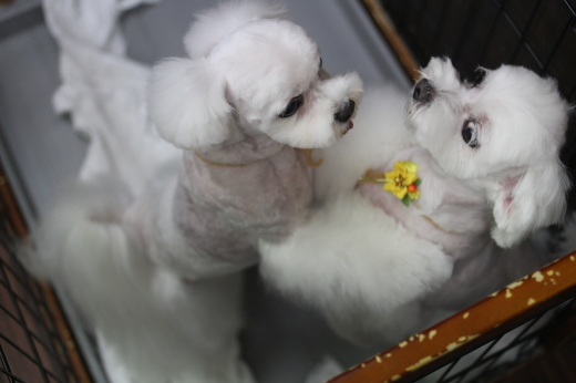 9月28日ご来店のワンちゃんです!!_b0130018_09501467.jpg