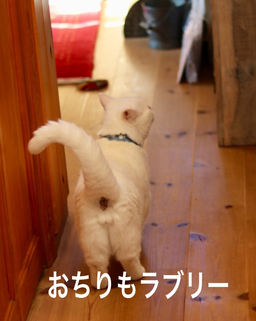 にゃんこ劇場「看板にゃんこ福ちゃん」_c0366722_04412611.jpeg