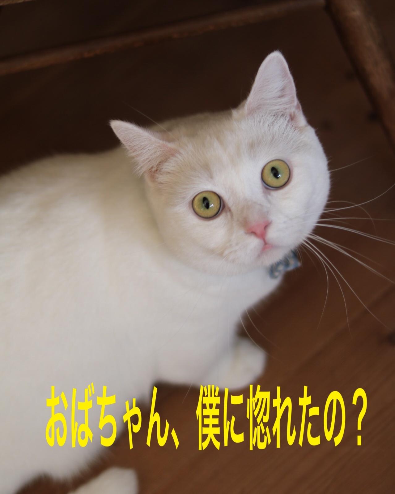 にゃんこ劇場「看板にゃんこ福ちゃん」_c0366722_04413689.jpeg