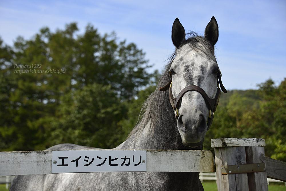 2018.10.5 レックススタッド☆エイシンヒカリ【A Shin Hikari】_f0250322_21474358.jpg