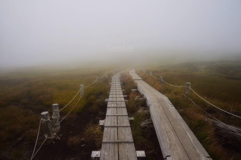 雲上の楽園へ_f0321522_11435671.jpg