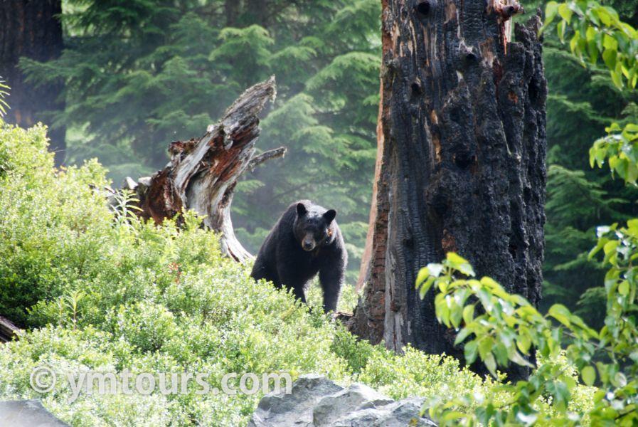【2019年最新版】ベアカントリー・カナダ 山でのクマ対策特集。_d0112928_03394817.jpg