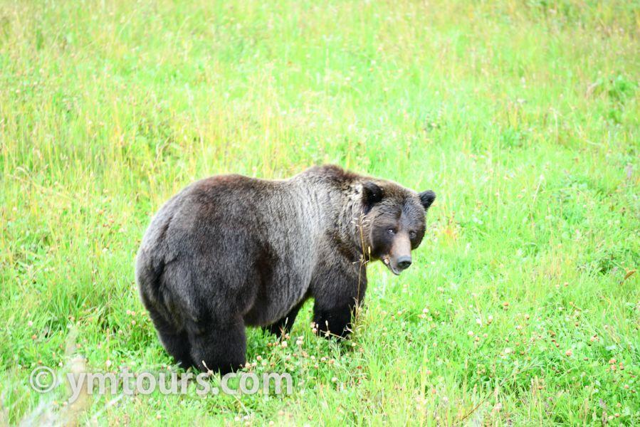 【2019年最新版】ベアカントリー・カナダ 山でのクマ対策特集。_d0112928_03404406.jpg