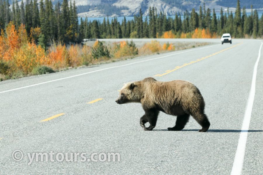 【2019年最新版】ベアカントリー・カナダ 山でのクマ対策特集。_d0112928_03423640.jpg