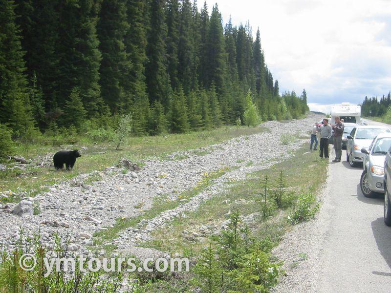 【2019年最新版】ベアカントリー・カナダ 山でのクマ対策特集。_d0112928_03424688.jpg