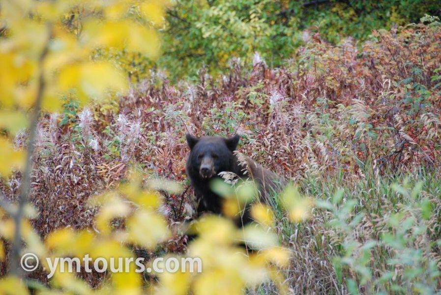 【2019年最新版】ベアカントリー・カナダ 山でのクマ対策特集。_d0112928_03455662.jpg