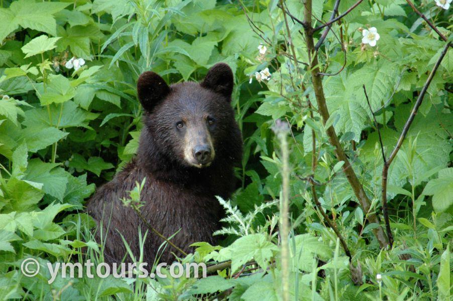 【2019年最新版】ベアカントリー・カナダ 山でのクマ対策特集。_d0112928_03460208.jpg