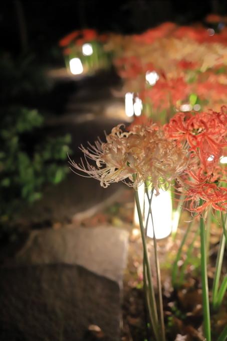 【西方寺】ライトアップ_f0348831_06525636.jpg