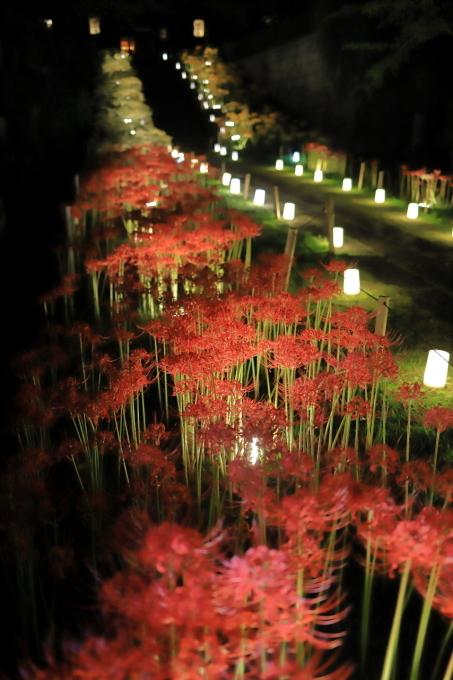 【西方寺】ライトアップ_f0348831_06530074.jpg