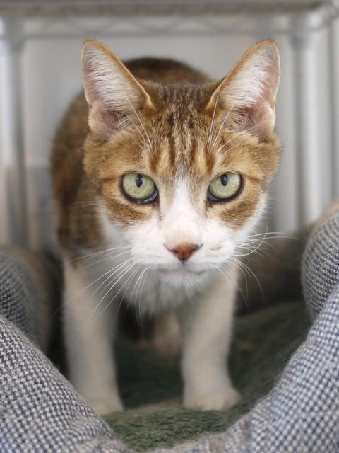 猫のお留守番 ウィンクくん編。_a0143140_22515497.jpg