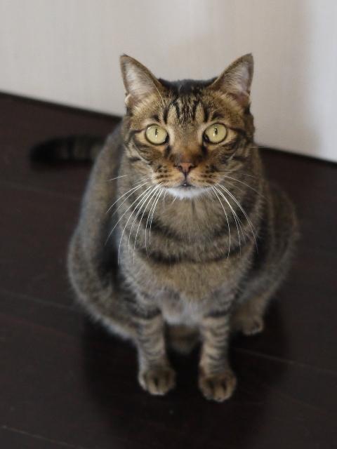 猫のお留守番 ララちゃん編。_a0143140_22550798.jpg