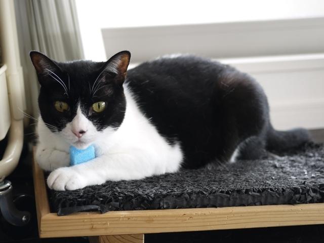 猫のお留守番 ピケちゃん編。_a0143140_22572304.jpg