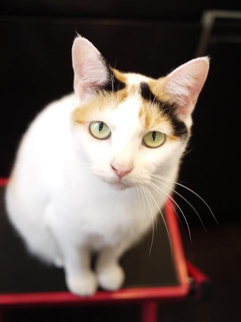 猫のお留守番 エンジェルちゃん編。_a0143140_23011023.jpg
